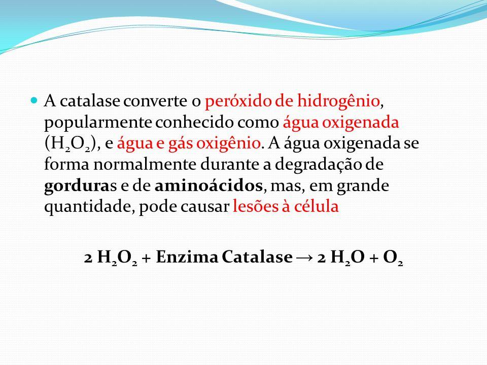 A catalase converte o peróxido de hidrogênio, popularmente conhecido como água oxigenada (H 2 O 2 ), e água e gás oxigênio. A água oxigenada se forma