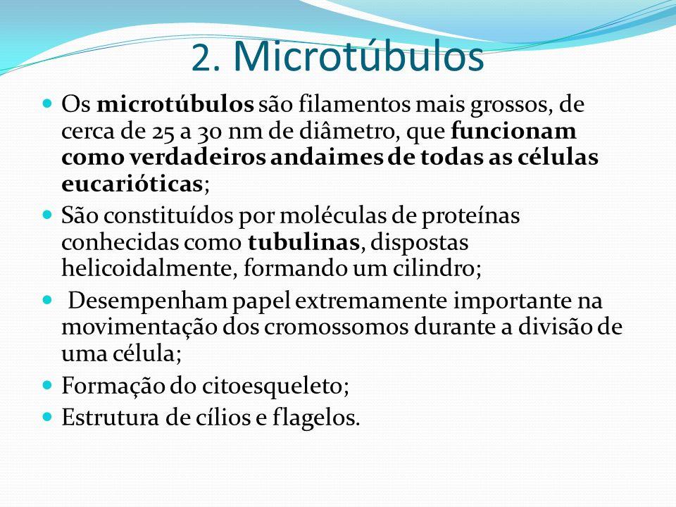 2. Microtúbulos Os microtúbulos são filamentos mais grossos, de cerca de 25 a 30 nm de diâmetro, que funcionam como verdadeiros andaimes de todas as c