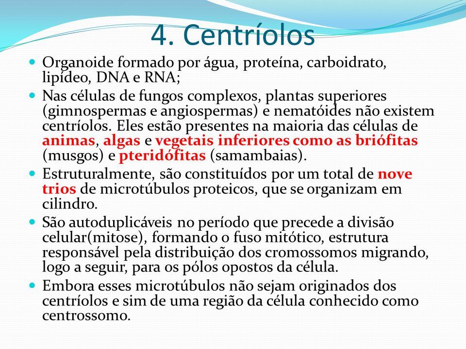 4. Centríolos Organoide formado por água, proteína, carboidrato, lipídeo, DNA e RNA; Nas células de fungos complexos, plantas superiores (gimnospermas