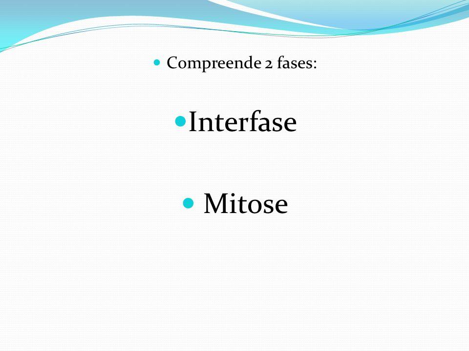 Compreende 2 fases: Interfase Mitose