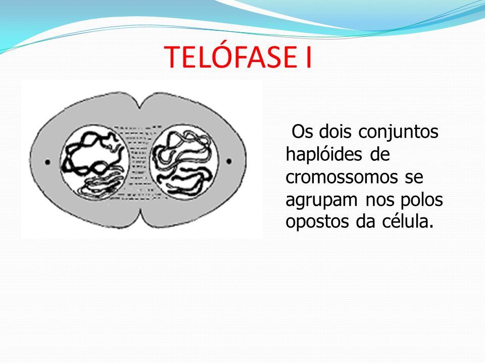 ANÁFASE I Separação dos cromossomos homólogos; Cromossomos homólogos são puxados para os pólos..