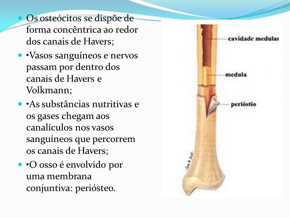 Os osteócitos se dispõe de forma concêntrica ao redor dos canais de Havers; Vasos sanguíneos e nervos passam por dentro dos canais de Havers e Volkman