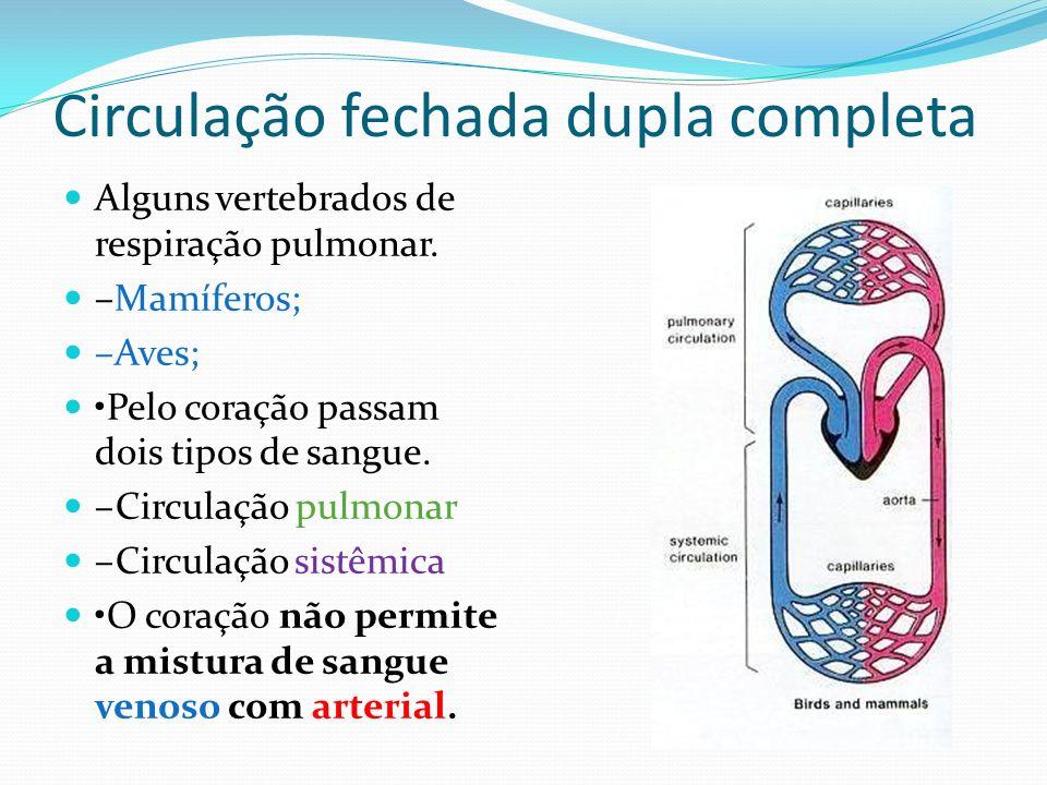 Circulação fechada dupla completa Alguns vertebrados de respiração pulmonar. –Mamíferos; –Aves; Pelo coração passam dois tipos de sangue. –Circulação