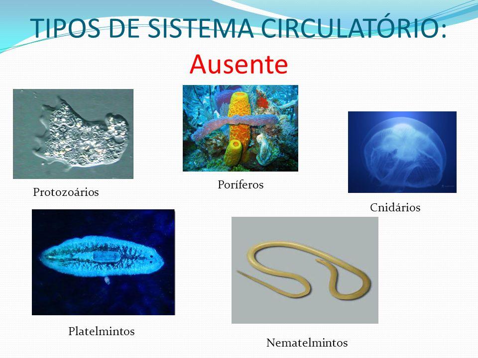 TIPOS DE SISTEMA CIRCULATÓRIO: Ausente Protozoários Poríferos Cnidários Platelmintos Nematelmintos