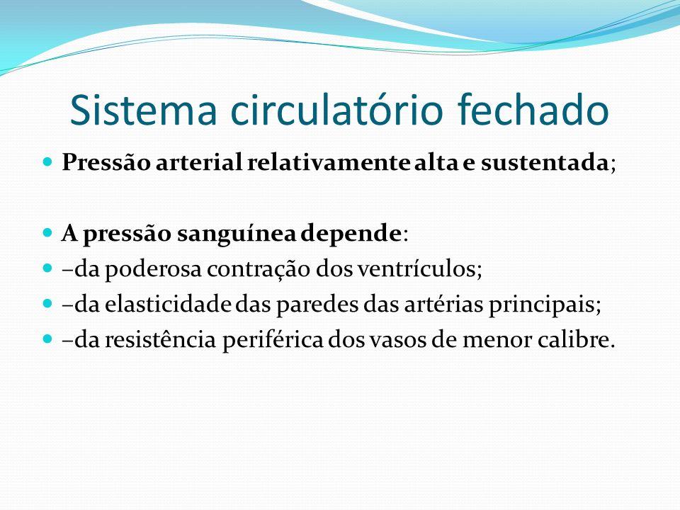 Sistema circulatório fechado Pressão arterial relativamente alta e sustentada; A pressão sanguínea depende: –da poderosa contração dos ventrículos; –d