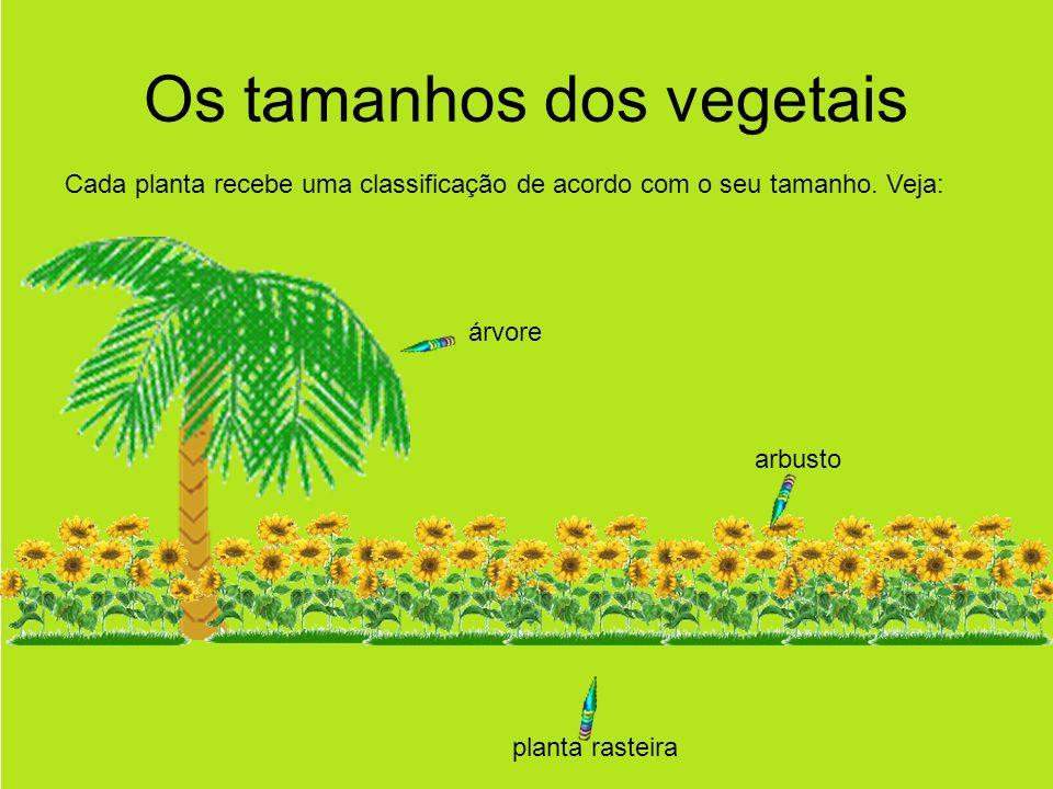 Os tamanhos dos vegetais Cada planta recebe uma classificação de acordo com o seu tamanho.