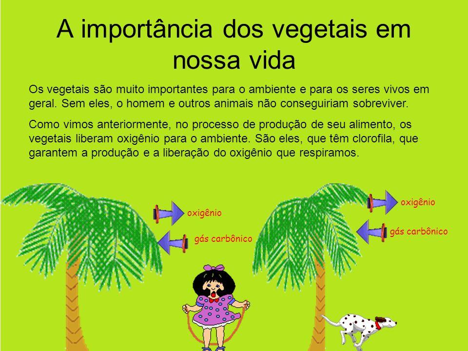 A importância dos vegetais em nossa vida Os vegetais são muito importantes para o ambiente e para os seres vivos em geral.
