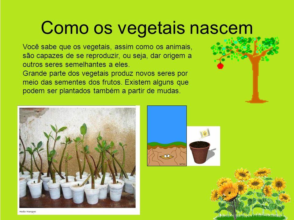 Como os vegetais nascem Você sabe que os vegetais, assim como os animais, são capazes de se reproduzir, ou seja, dar origem a outros seres semelhantes a eles.