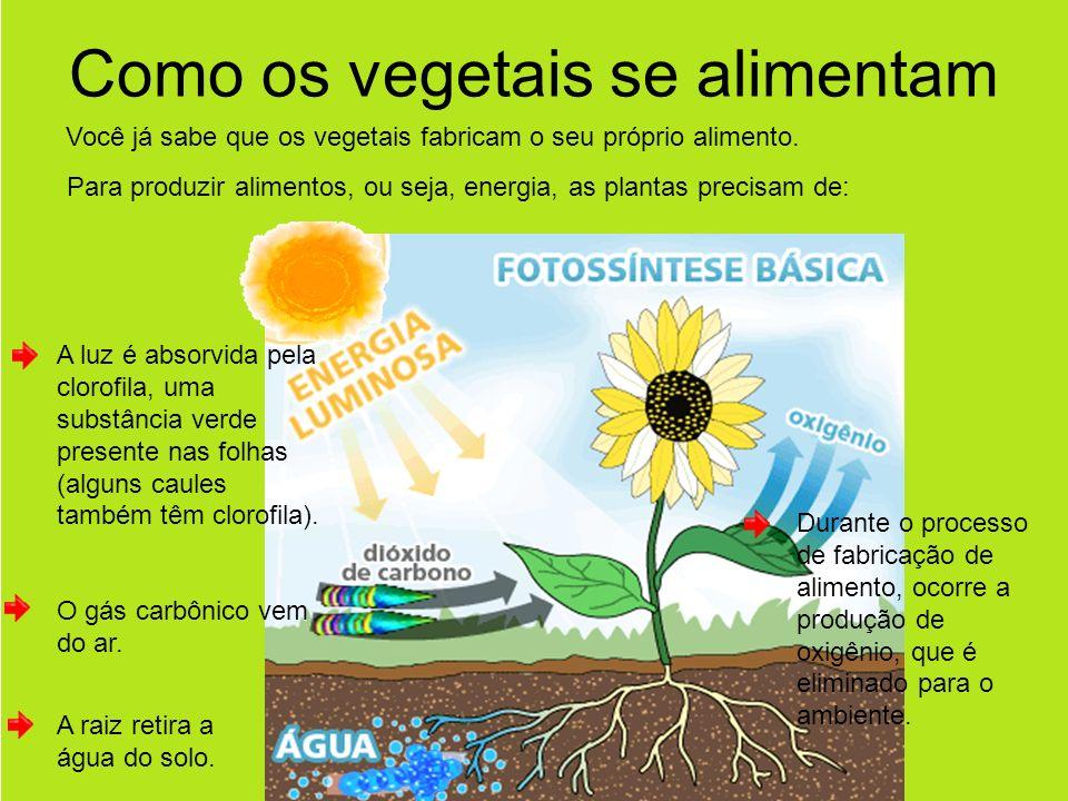 Como os vegetais se alimentam Você já sabe que os vegetais fabricam o seu próprio alimento.