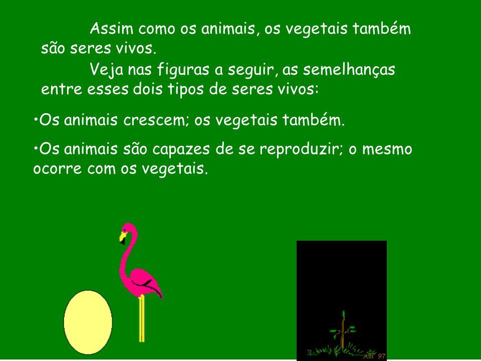 Assim como os animais, os vegetais também são seres vivos. Veja nas figuras a seguir, as semelhanças entre esses dois tipos de seres vivos: Os animais
