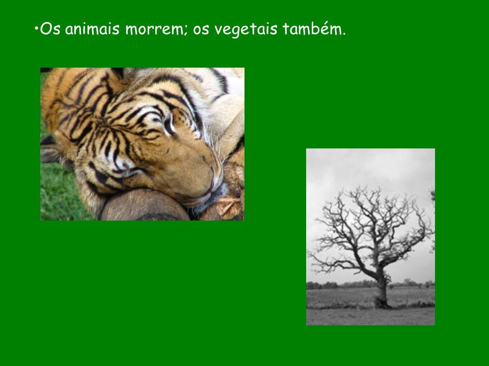 Os animais morrem; os vegetais também.