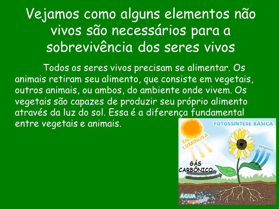Vejamos como alguns elementos não vivos são necessários para a sobrevivência dos seres vivos Todos os seres vivos precisam se alimentar. Os animais re