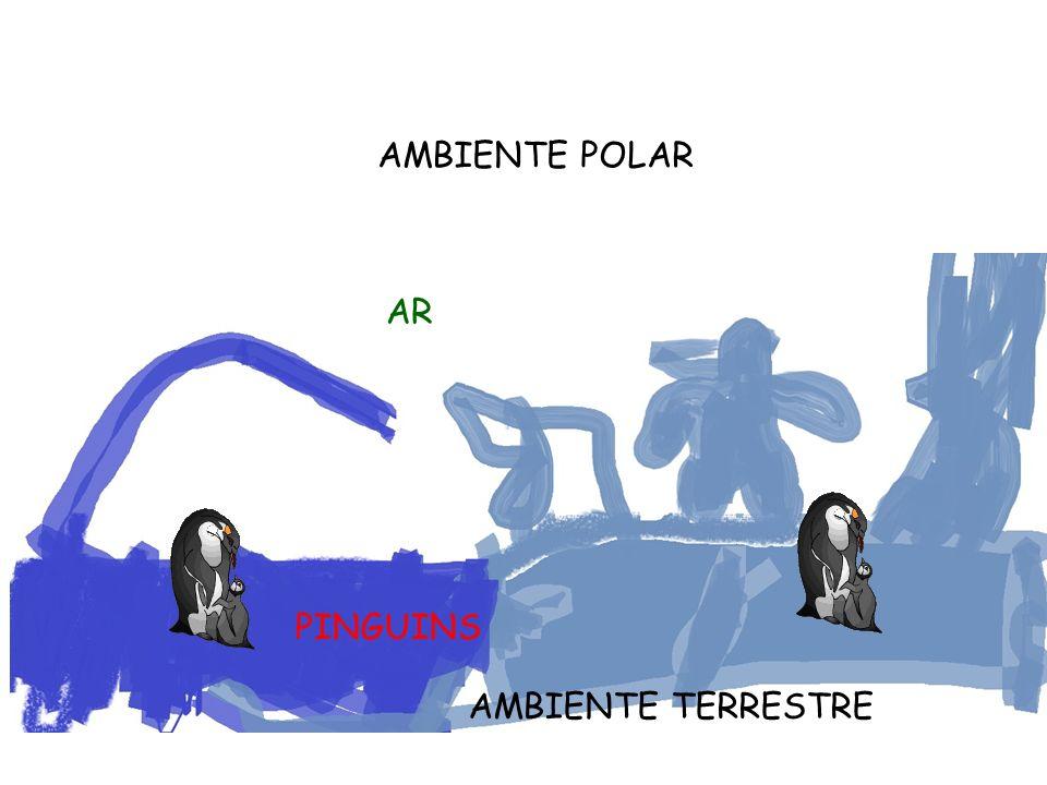 AMBIENTE TERRESTRE AMBIENTE POLAR AR PINGUINS