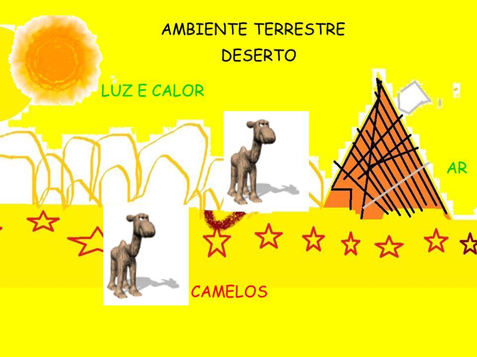 AMBIENTE TERRESTRE DESERTO CAMELOS LUZ E CALOR AR
