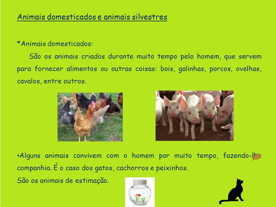 Animais domesticados e animais silvestres *Animais domesticados: São os animais criados durante muito tempo pelo homem, que servem para fornecer alime