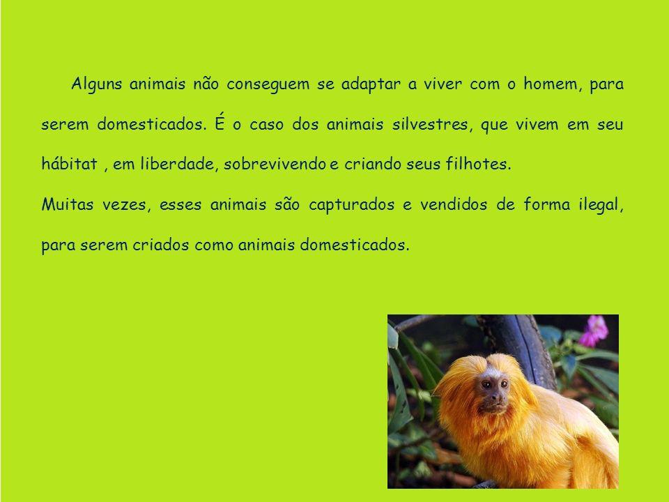 Alguns animais não conseguem se adaptar a viver com o homem, para serem domesticados. É o caso dos animais silvestres, que vivem em seu hábitat, em li