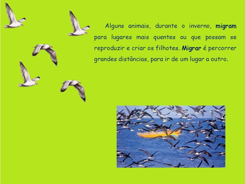 Alguns animais, durante o inverno, migram para lugares mais quentes ou que possam se reproduzir e criar os filhotes. Migrar é percorrer grandes distân