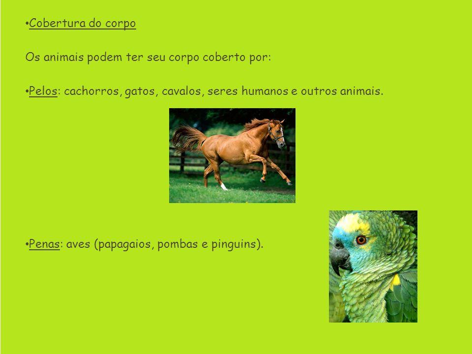 Cobertura do corpo Os animais podem ter seu corpo coberto por: Pelos: cachorros, gatos, cavalos, seres humanos e outros animais. Penas: aves (papagaio