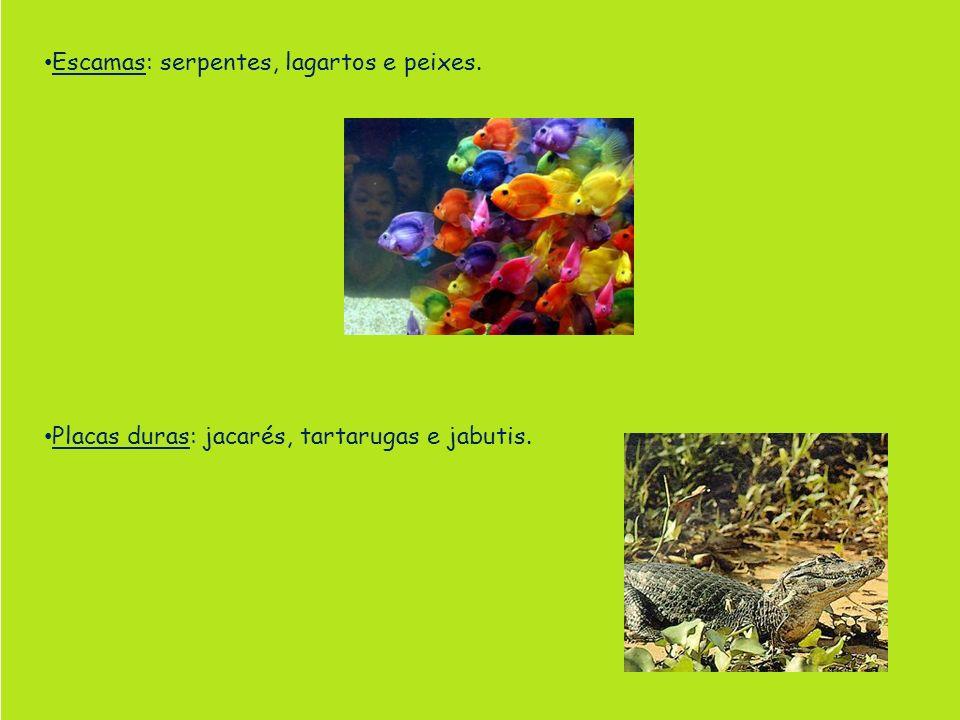 Escamas: serpentes, lagartos e peixes. Placas duras: jacarés, tartarugas e jabutis.