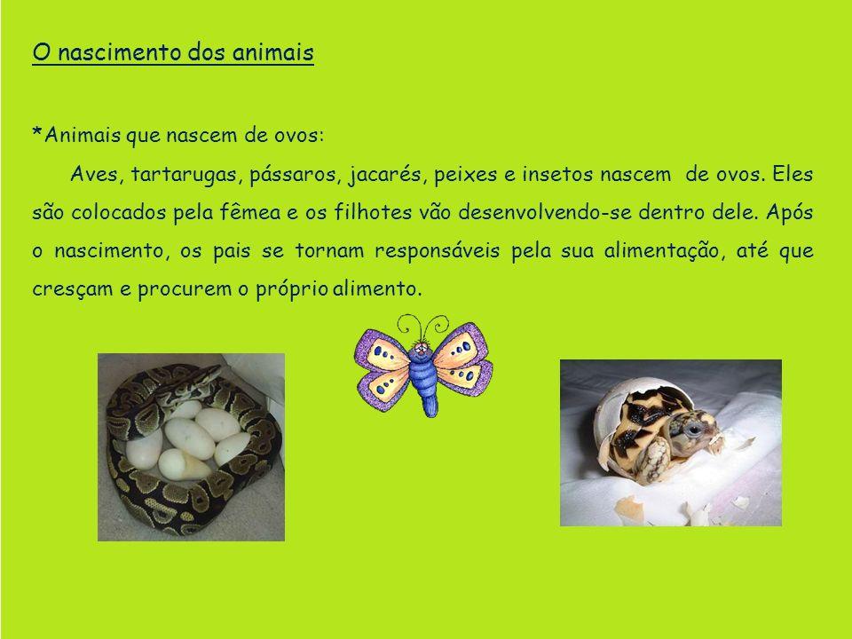 O nascimento dos animais *Animais que nascem de ovos: Aves, tartarugas, pássaros, jacarés, peixes e insetos nascem de ovos. Eles são colocados pela fê