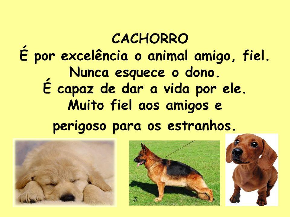 CACHORRO É por excelência o animal amigo, fiel. Nunca esquece o dono. É capaz de dar a vida por ele. Muito fiel aos amigos e perigoso para os estranho