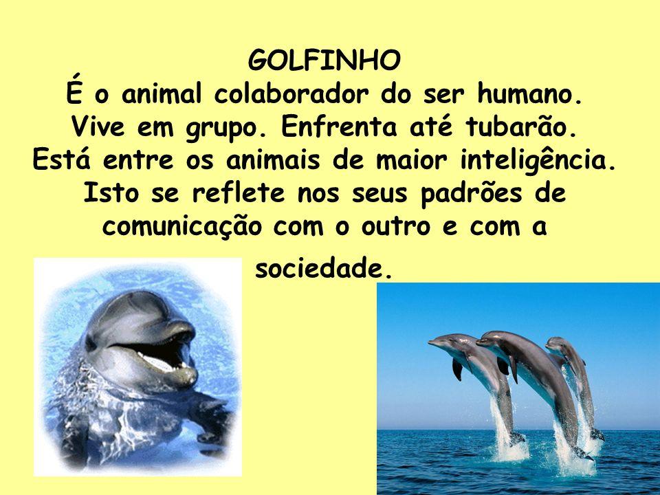 GOLFINHO É o animal colaborador do ser humano. Vive em grupo. Enfrenta até tubarão. Está entre os animais de maior inteligência. Isto se reflete nos s