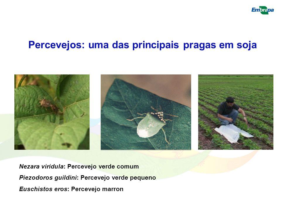 Percevejos: uma das principais pragas em soja Nezara viridula: Percevejo verde comum Piezodoros guildini: Percevejo verde pequeno Euschistos eros: Per
