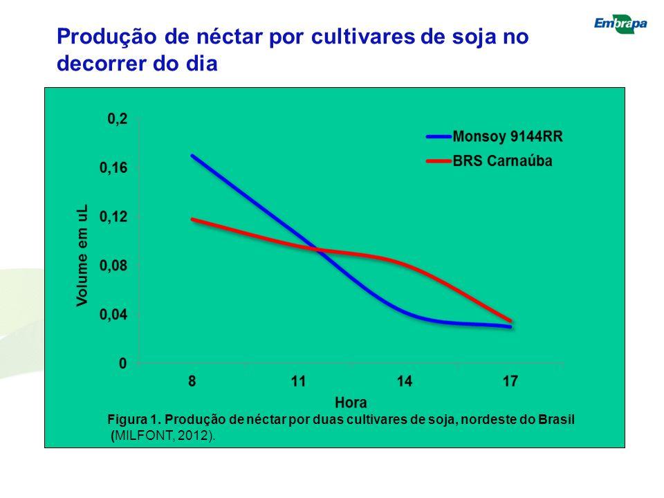 Figura 1. Produção de néctar por duas cultivares de soja, nordeste do Brasil (MILFONT, 2012). Produção de néctar por cultivares de soja no decorrer do
