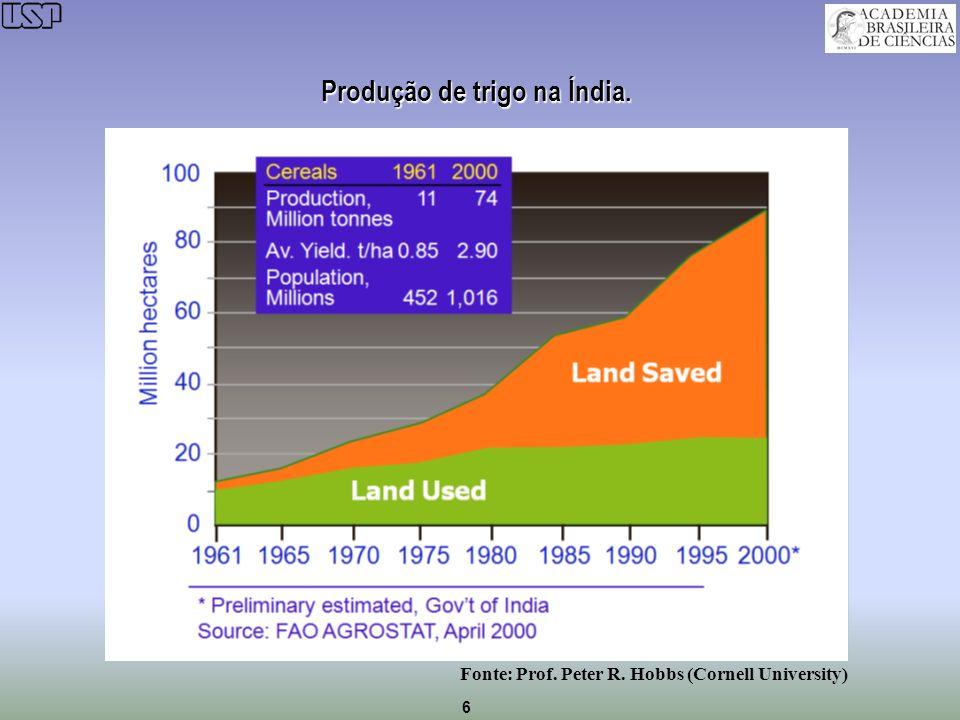 6 Produção de trigo na Índia. Fonte: Prof. Peter R. Hobbs (Cornell University)