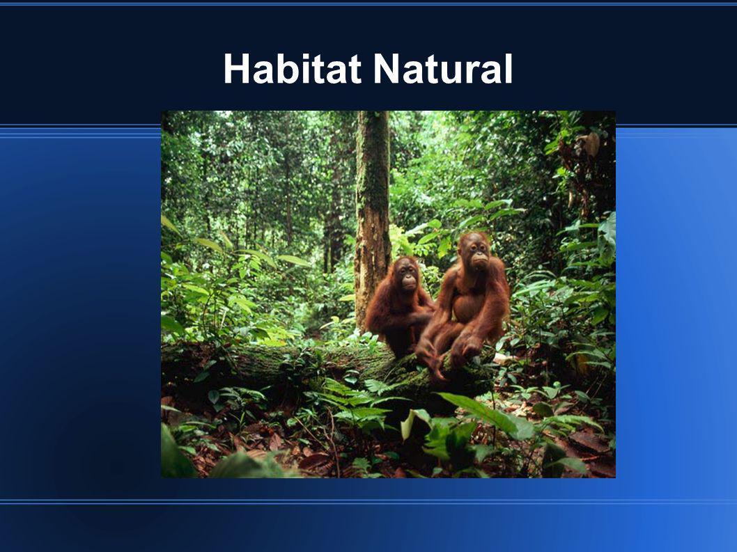 Habitat Natural