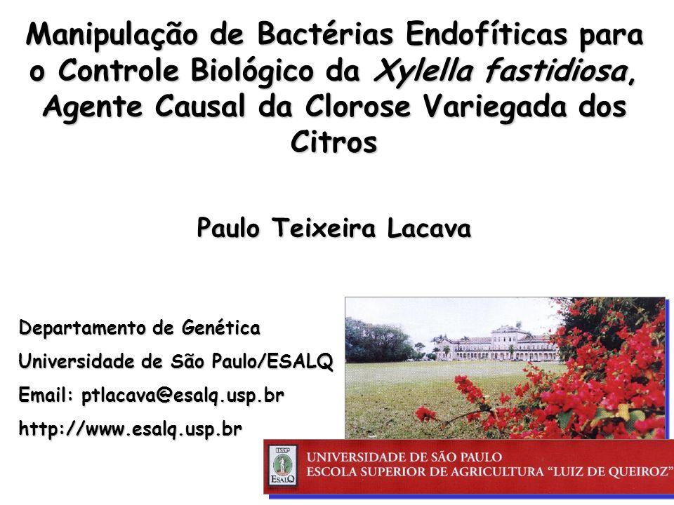 Departamento de Genética Universidade de São Paulo/ESALQ Email: ptlacava@esalq.usp.br http://www.esalq.usp.br Manipulação de Bactérias Endofíticas para o Controle Biológico da Xylella fastidiosa, Agente Causal da Clorose Variegada dos Citros Paulo Teixeira Lacava
