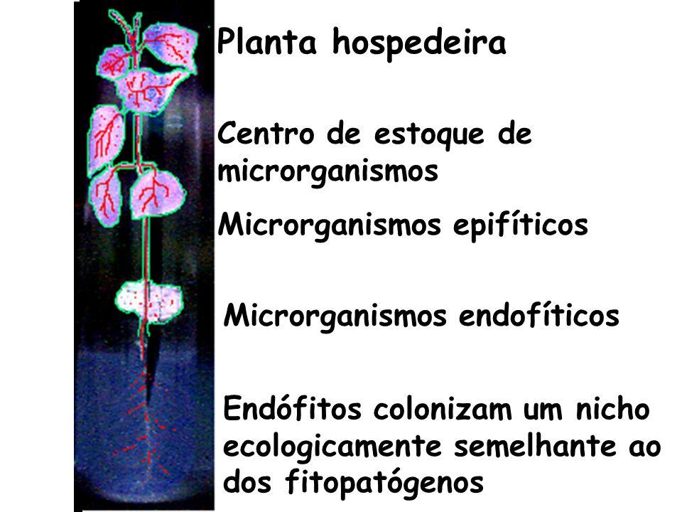 Petrini (1991): em pelo menos uma fase de seu ciclo de vida colonizam o interior de tecidos vegetais aéreos sem causar danos ao hospedeiro (exclui bactérias fixadoras de N 2 e os fungos micorrízicos).