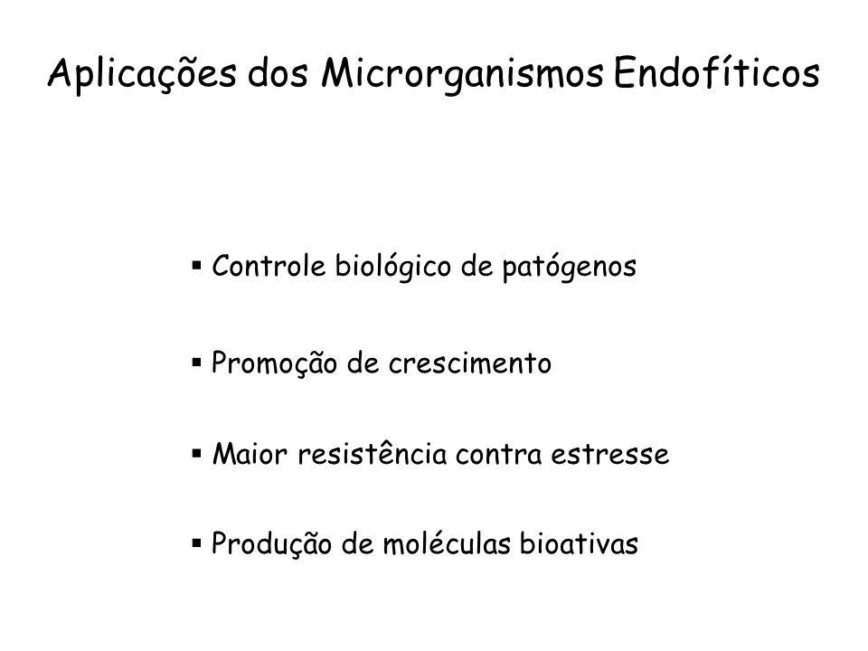 Planta hospedeira Centro de estoque de microrganismos Microrganismos epifíticos Microrganismos endofíticos Endófitos colonizam um nicho ecologicamente semelhante ao dos fitopatógenos