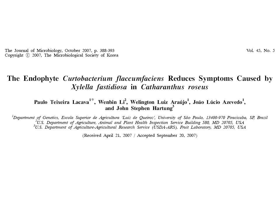 Catharanthus roseus (Madagaskar periwinkle) Monteiro, P.B., Reunaudin, J., Jagoueix-Eveillard, S., Ayres, A.J., Garnier, M., and Bové, J.M.