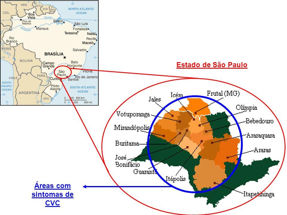 Estado de São Paulo Áreas com sintomas de CVC