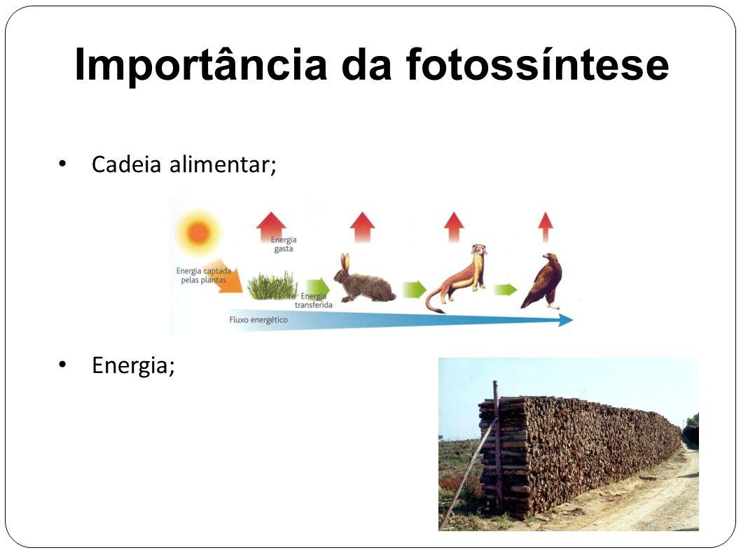 Importância da fotossíntese Cadeia alimentar; Energia;