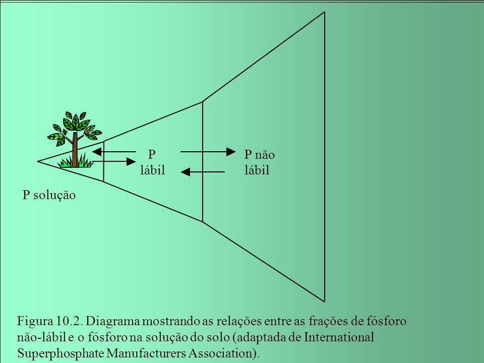 P lábil P solução P não lábil Figura 10.2. Diagrama mostrando as relações entre as frações de fósforo não-lábil e o fósforo na solução do solo (adapta