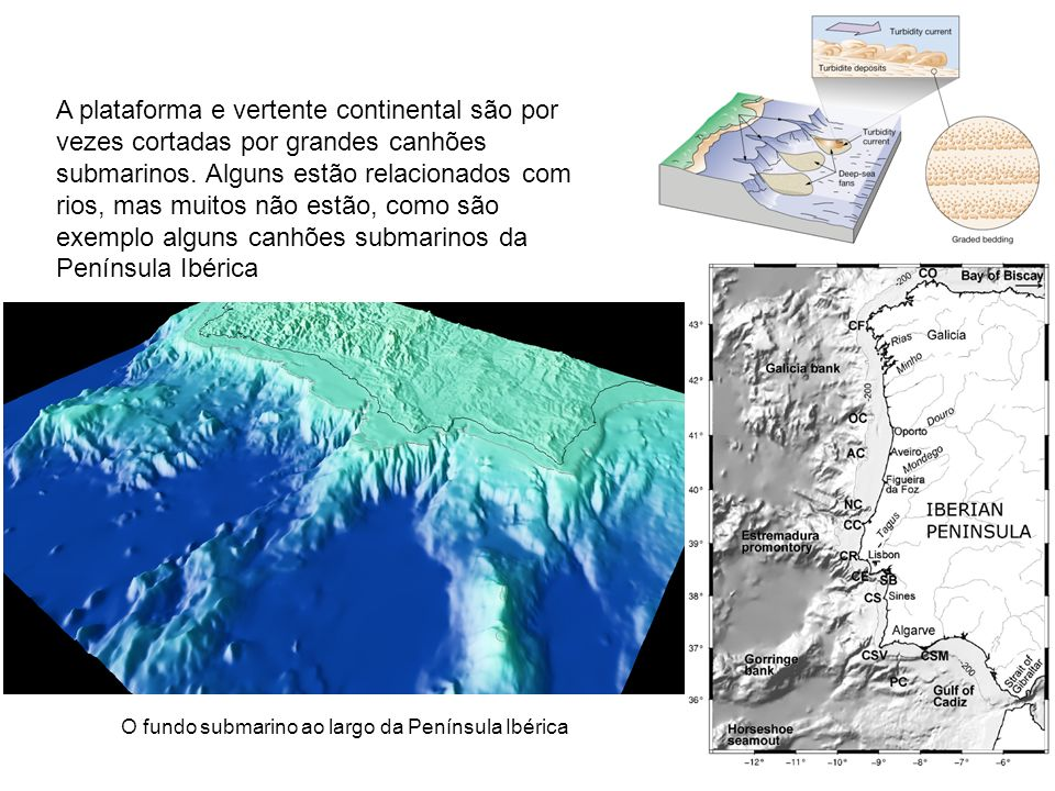 A plataforma e vertente continental são por vezes cortadas por grandes canhões submarinos. Alguns estão relacionados com rios, mas muitos não estão, c