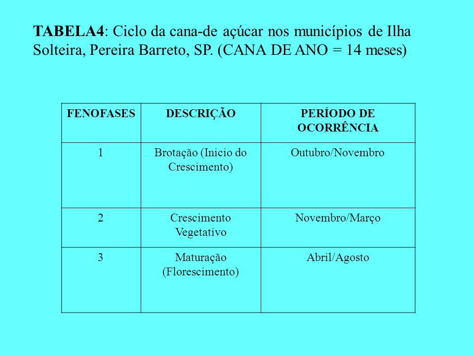TABELA4: Ciclo da cana-de açúcar nos municípios de Ilha Solteira, Pereira Barreto, SP. (CANA DE ANO = 14 meses) FENOFASESDESCRIÇÃOPERÍODO DE OCORRÊNCI