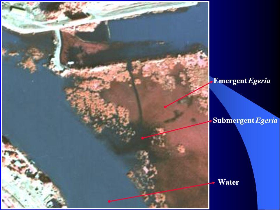 Emergent Egeria Submergent Egeria Water