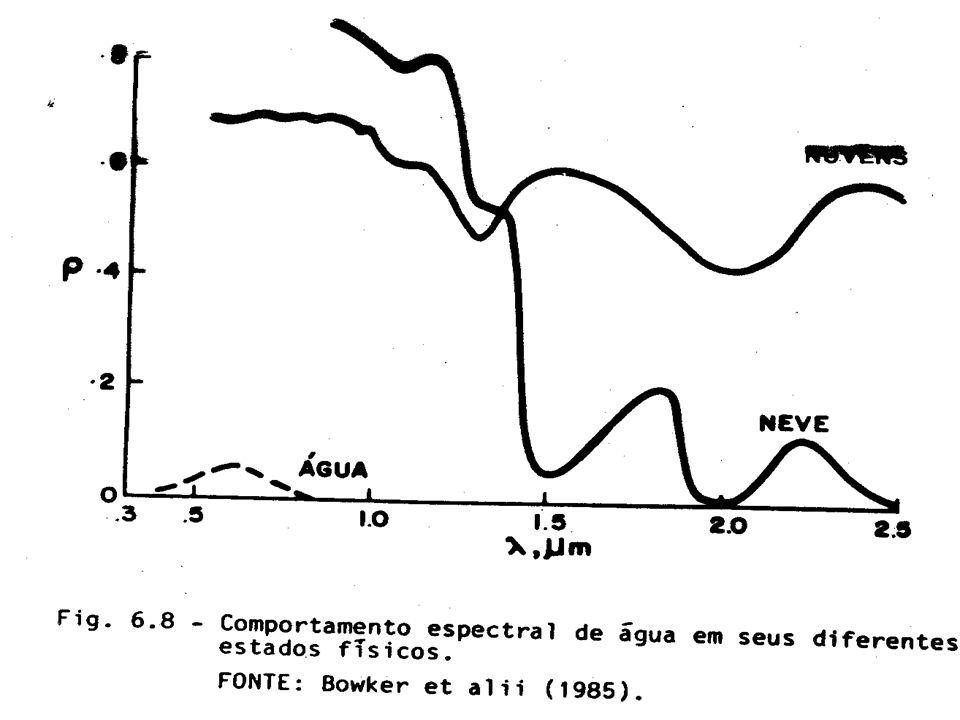 Egeria densa in situ and above water