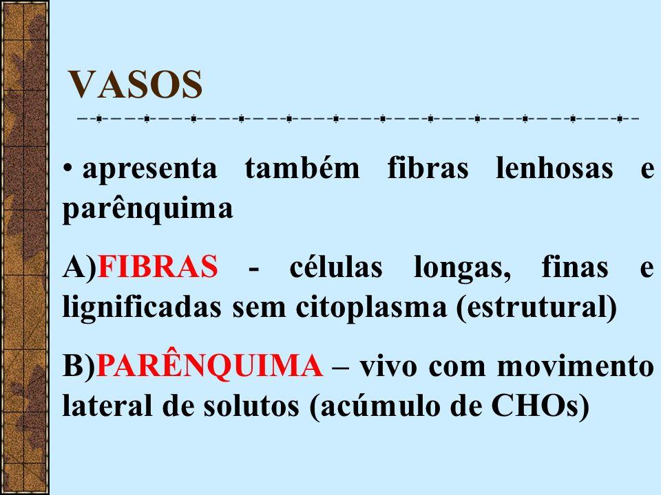 VASOS apresenta também fibras lenhosas e parênquima A)FIBRAS - células longas, finas e lignificadas sem citoplasma (estrutural) B)PARÊNQUIMA – vivo co