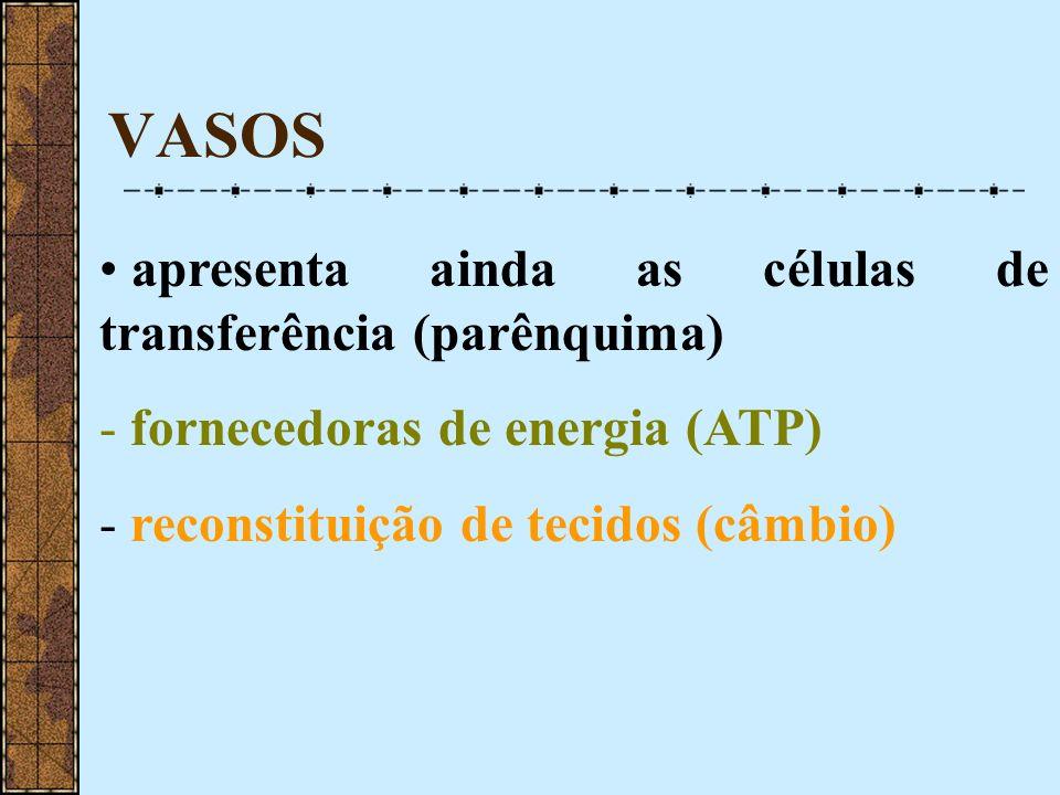 VASOS apresenta ainda as células de transferência (parênquima) - fornecedoras de energia (ATP) - reconstituição de tecidos (câmbio)