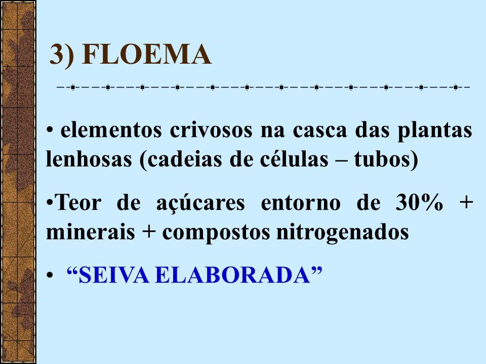 3) FLOEMA elementos crivosos na casca das plantas lenhosas (cadeias de células – tubos) Teor de açúcares entorno de 30% + minerais + compostos nitroge