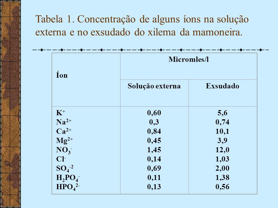 Tabela 1. Concentração de alguns íons na solução externa e no exsudado do xilema da mamoneira. Íon Micromles/l Solução externaExsudado K + Na 2+ Ca 2+