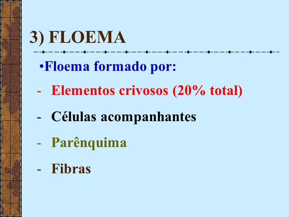 3) FLOEMA Floema formado por: -Elementos crivosos (20% total) -Células acompanhantes -Parênquima -Fibras