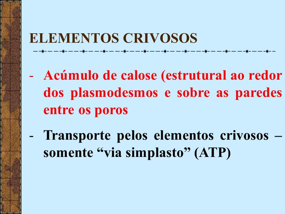 ELEMENTOS CRIVOSOS -Acúmulo de calose (estrutural ao redor dos plasmodesmos e sobre as paredes entre os poros -Transporte pelos elementos crivosos – s