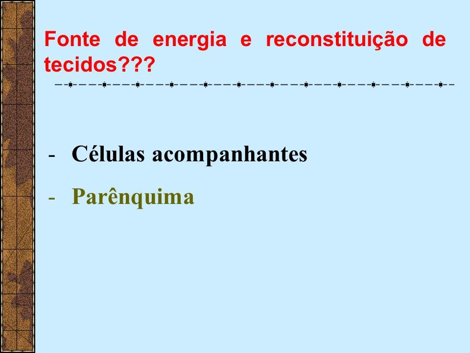 -Células acompanhantes -Parênquima Fonte de energia e reconstituição de tecidos???