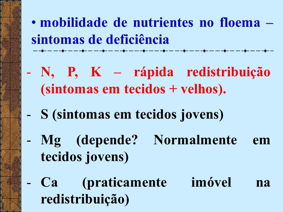 mobilidade de nutrientes no floema – sintomas de deficiência -N, P, K – rápida redistribuição (sintomas em tecidos + velhos). -S (sintomas em tecidos