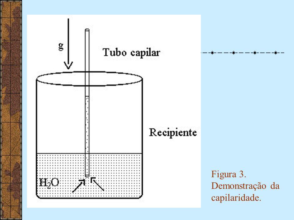 Figura 4: Potencial hídrico e ascensão de água e solutos pelo xilema.